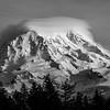 Mount Rainier Contrasts