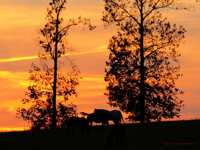 In The Sunset. Horse ranch near Bagdad, Louisiana. Oly E510 & ZD50-200.