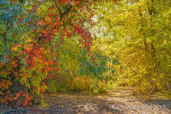 Fall Color, San Rafael Park, Reno, Nevada