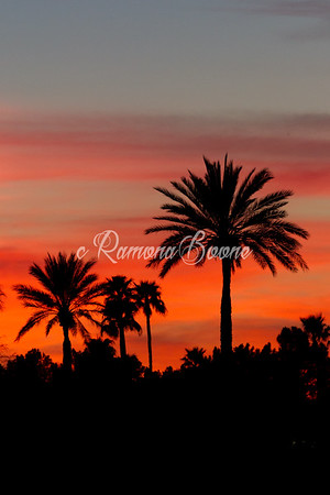 8. Palm Trees in Sunset