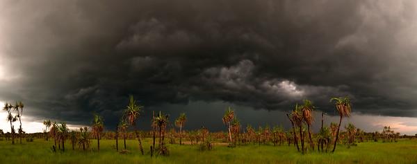 Pandanus Storm
