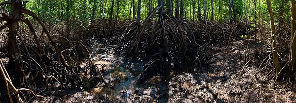 MangrovePanorama