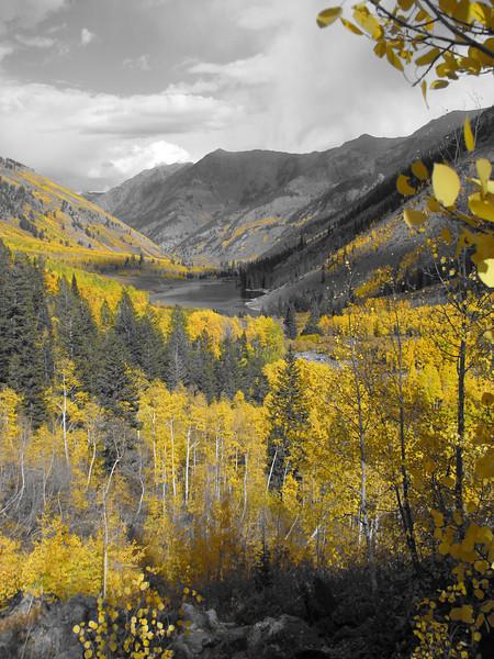 aspens in fall 5 jpg