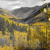 aspens in fall 5 jpg