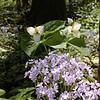 Spring 2008 07