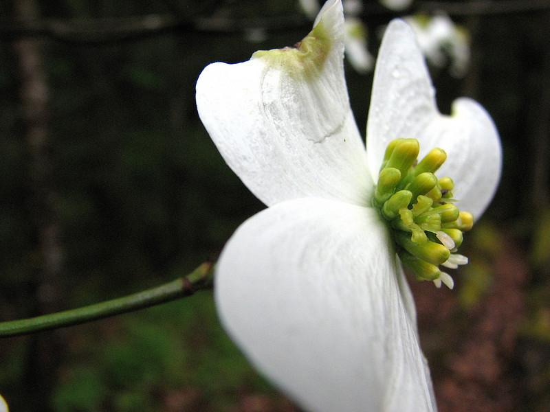 Spring 2008 48