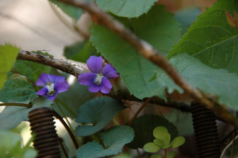 Spring 2008 11