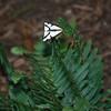 Cool Moth