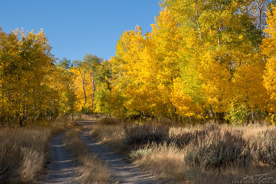 The Aspens of Monitor Pass