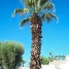 California 2007