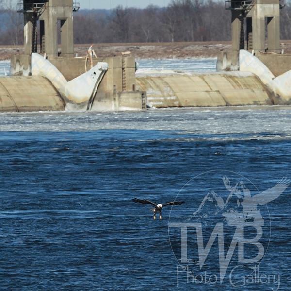Clarksville Mo Lock and Dam January