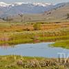 Slough Creek meadows, Yellowstone N.P.