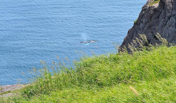 East coast of Newfoundland