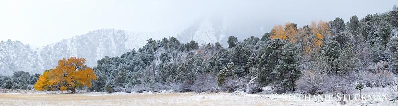 Snowy Fall Cottonwood