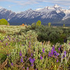 """""""springs a new"""" the Grand Tetons N.P."""