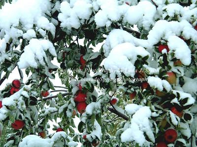 Snow Apples