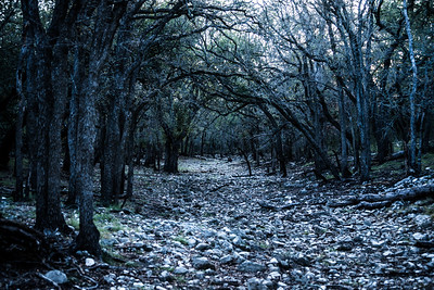 South Texas Creek Bed