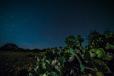 Cactus Under the Stars