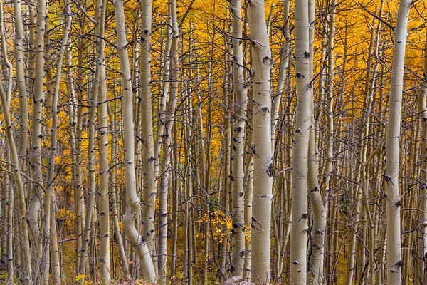 Take a stroll in the Aspens