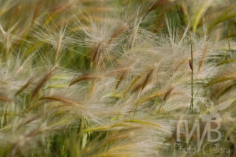 splendor of the grass