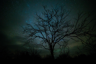 Starlight Through Mesquite