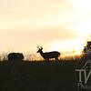sunset in a Deer's eye