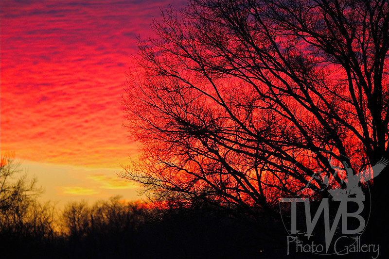 """"""" Fire in the Sky """" ; sunset from Forest Park"""