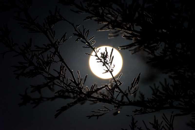 Moon through a dewy tree branch