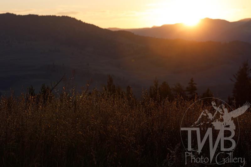 TWBPhotoGallery-0988