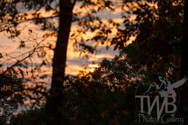 TWBPhotoGallery-7241