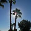 Palm shade, California