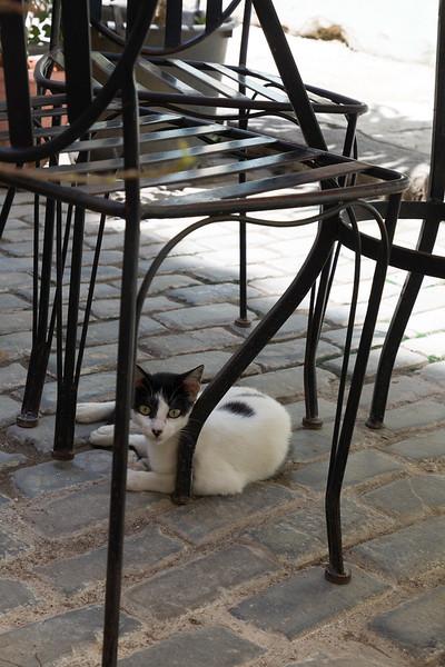 Cat under a chair