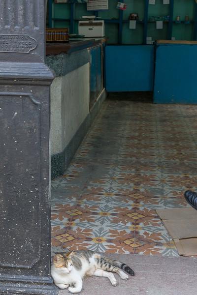 A sleeping cat near the Rum Museum