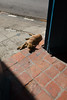 The first of many dogs and cats I noticed at various locations in Cuba. Most were sleeping.