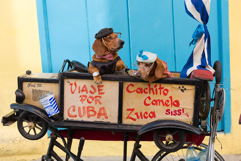 Cuba Going to the Dogs