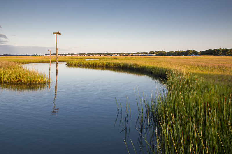 Gull Overlooking the Chincoteague Shoreline