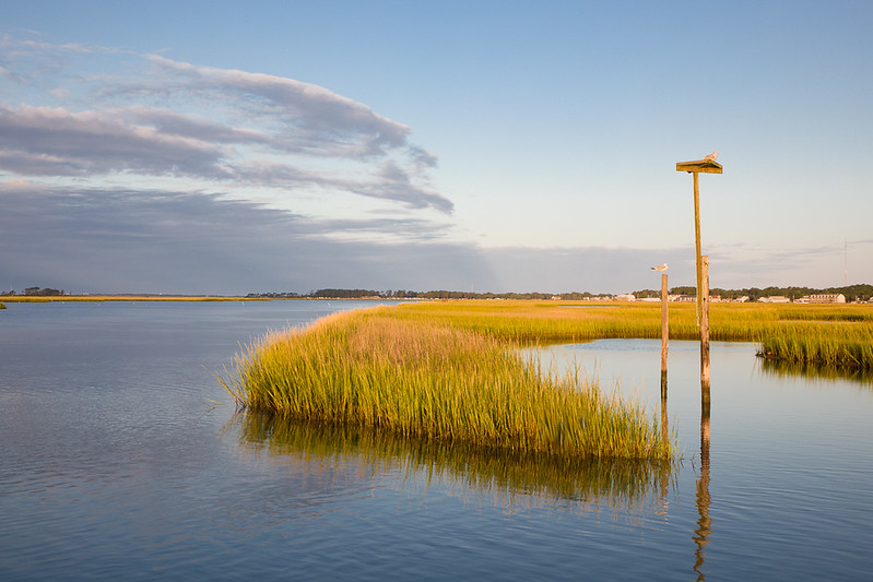 Gulll Overlooking the Marsh