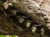 Bats Under Log