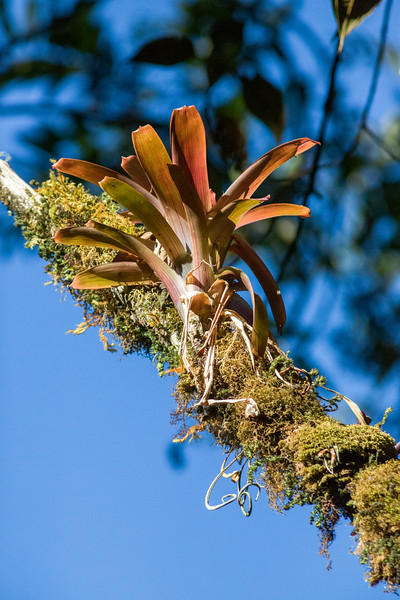Mossy Branch with Bromiliad