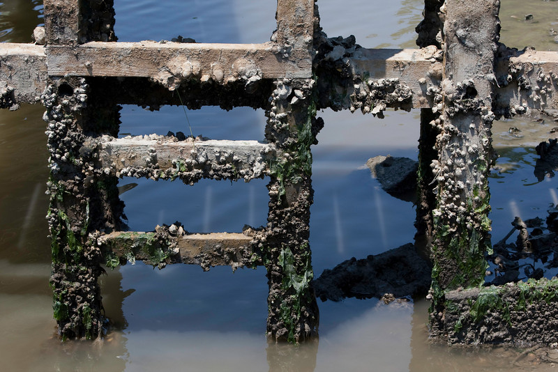 Pier with Barnacles III