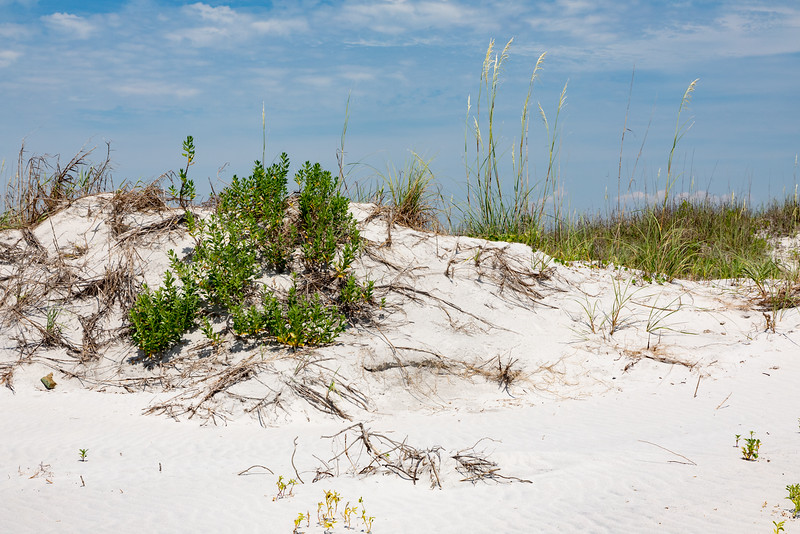 South Topsail Dunes