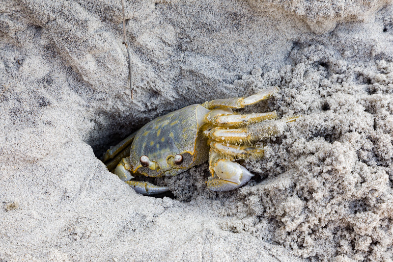 Crab in a Hole