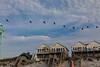 Nine Pelicans Flying