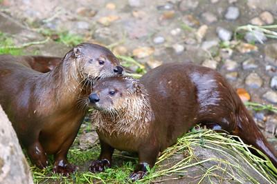 Otter Sanctuary