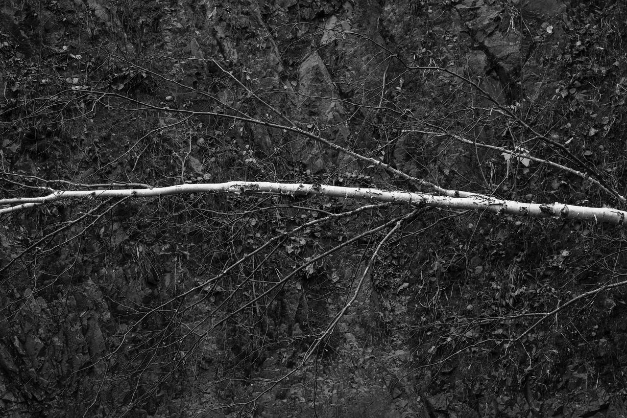 Leaning tree along the cliffs of Tischer Creek. Duluth, MN. #monotone #blackandwhite #pentaxk1 #duluthmn #northshore