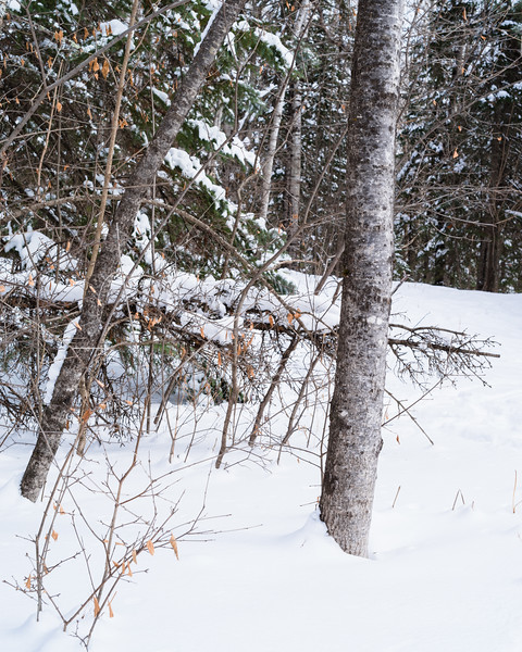 Fresh snow on a nearby trail, Duluth, MN. #snow #woods #pentax #winterscene #trees