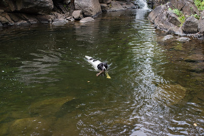 Our dog enjoys Keen Creek.