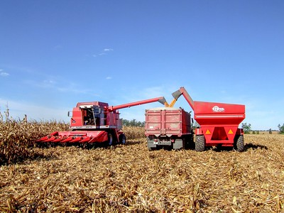 Harvesting Corn in Illinois