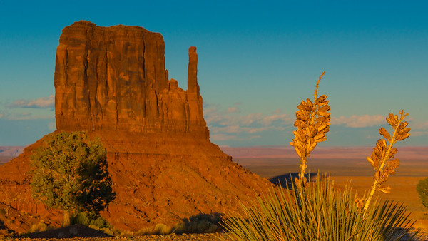 Cactus and formation, Monument Valley