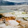 Mammoth Hot Springs - YNP